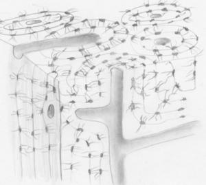 Bindegewebe – Knochengewebe BodyLab Osteopathie Physiotherapie Rehabilitation Training Zürich