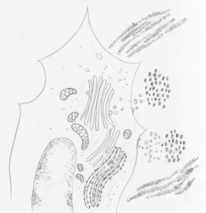Bindegewebe I – Unser täglich Brot BodyLab Osteopathie Physiotherapie Rehabilitation Training Zürich