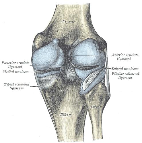 Meniskusverletzungen bei arthrotischem Knie: Arthroskopie ja oder nein?